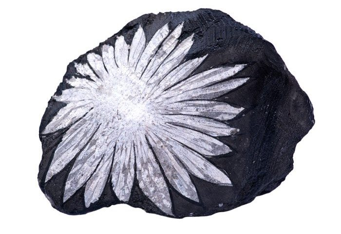 chrysanthenum stone