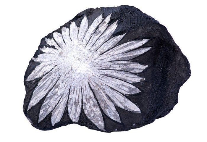 chrysanthenum stone