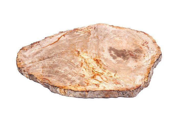 silicified petrified wood stone