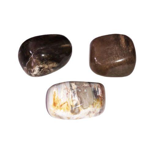 petrified wood tumbled stones