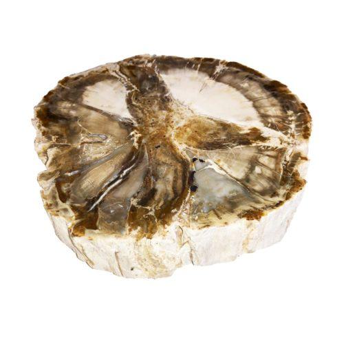 fossilised-wood