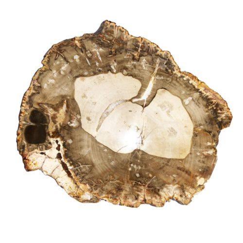 fossilised-wood-mcbf02