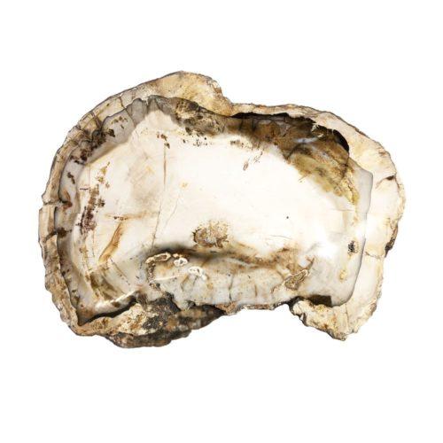 fossilised-wood-mcbf04