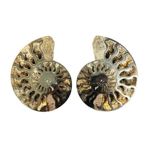 10cm-ammonite-pair-mcami10
